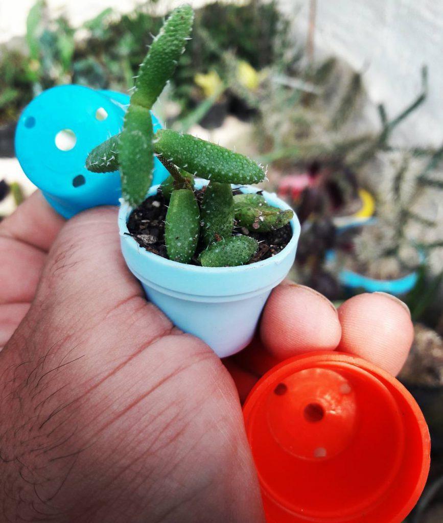 گلدان پلاستیکی کوچک ارزان